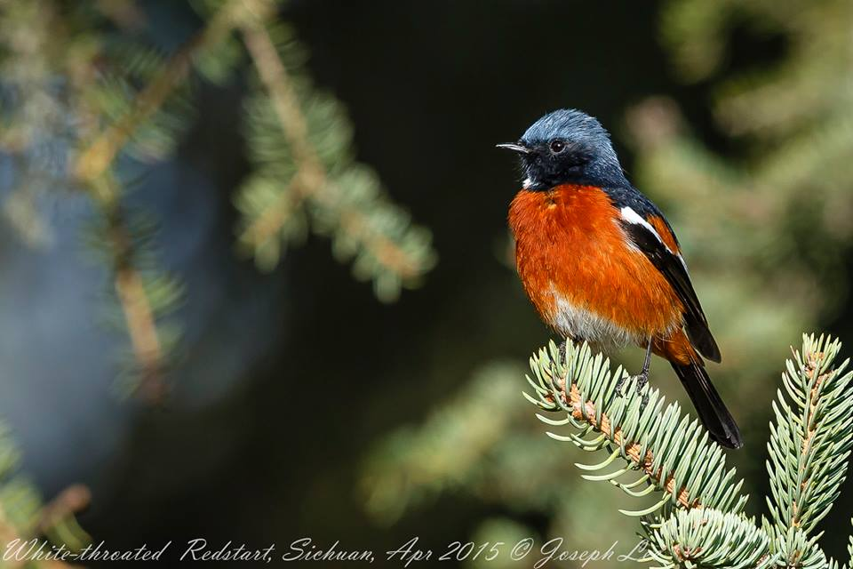 birding in China, summer wong bird tours, China bird tour